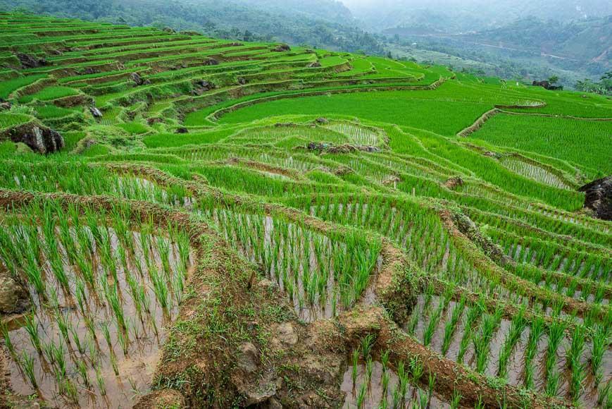 آشنایی با مزارع برنج Pu Lu&ocircng ویتنام