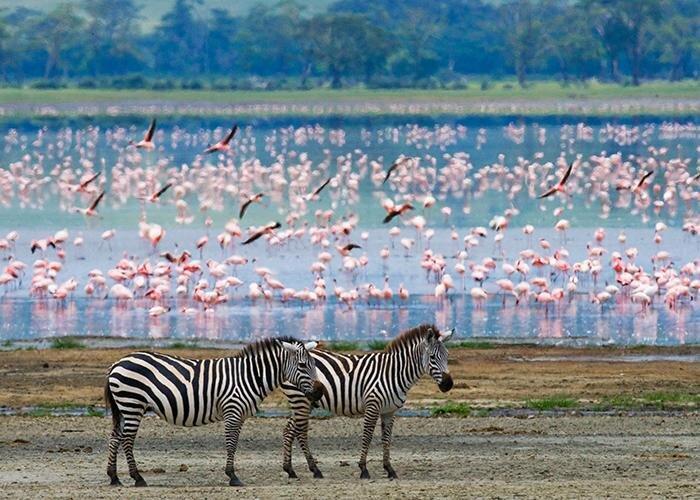 5 تا از بهترین مقاصدی که می توان در آفریقا به آن ها سفر کرد