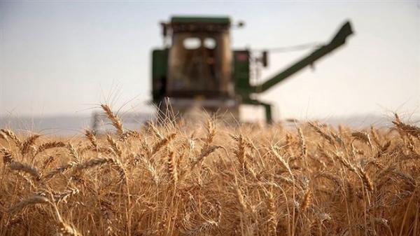 اتاق ایران، تعرفه ترجیحی روسیه برای صادرات 17.5 میلیون تن گندم و جو به این کشور