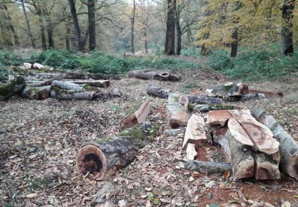 تعریض جاده به قیمت قطع هزاران درخت بلوط هزار ساله، مرگ دنا در خاموشی