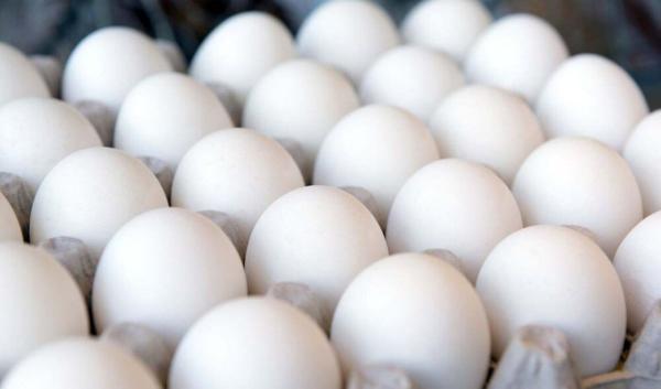تخم مرغ باز هم گران شد