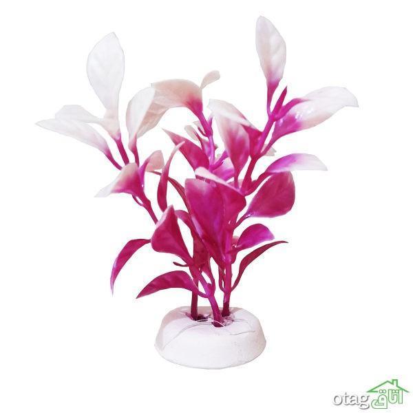 خرید 39 مدل گیاه آکواریوم بسیار زیبا با قیمت مناسب