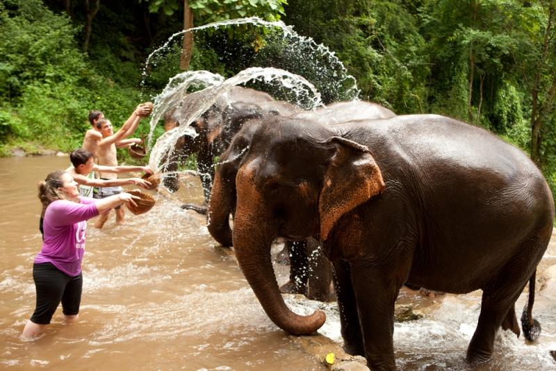 خانه سالمندان فیل ها در پوکت